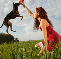 free discount pet prescriptions