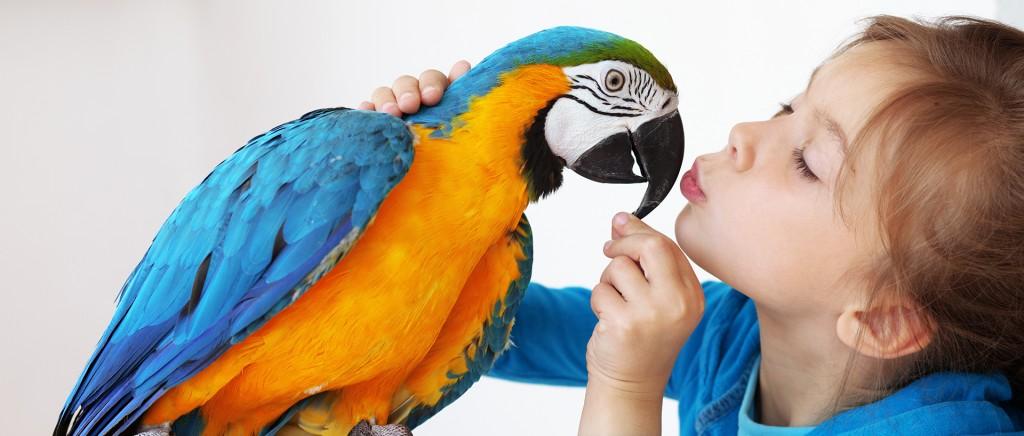 Parrot&Girl