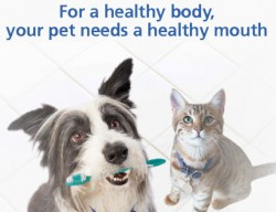 pet-dental, pet-advice, reduced-cost-veterinary-care,